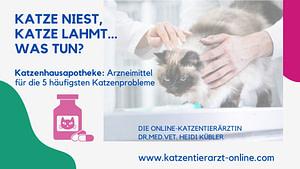Katze-niest-Katze-lahmt-Katzenhausapotheke